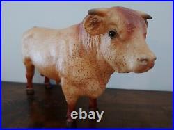 Reuben Charolais Bull Web Special Run Red Roan Bovine #712305